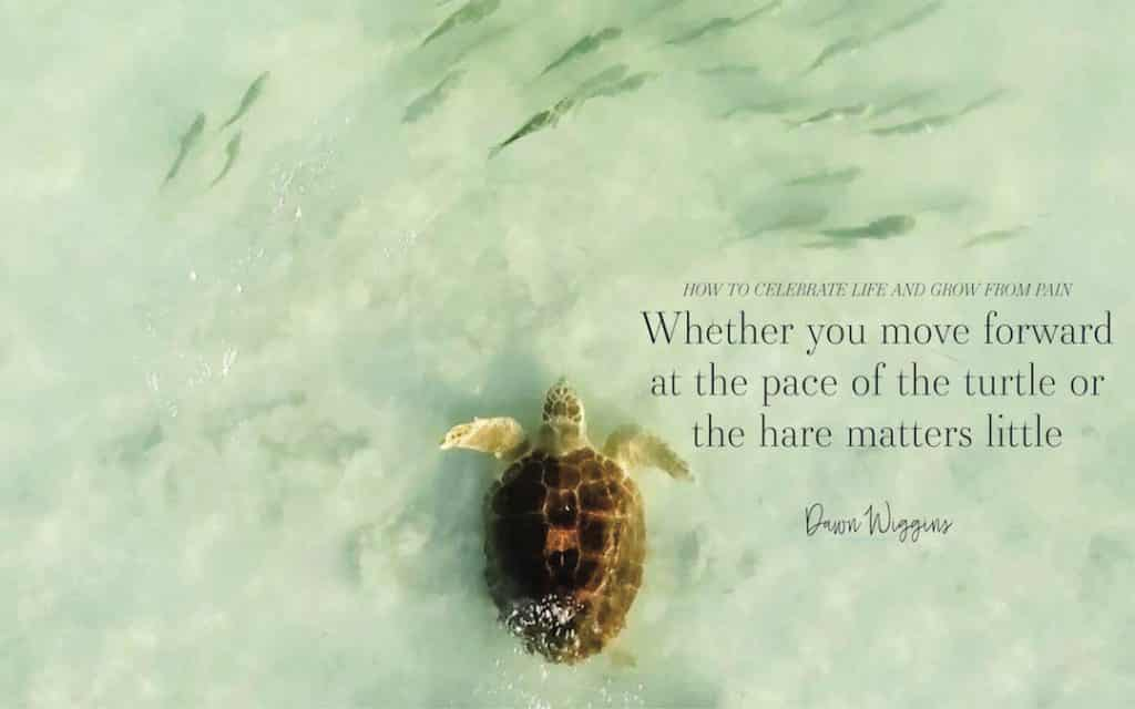 turtle in the ocean, Celebrate Life Now: Reflecting the Past and Welcoming the Future